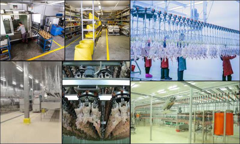 Kanatlı Eti Üretimi ve Tavuk Kesim Makinelerinin Önemi
