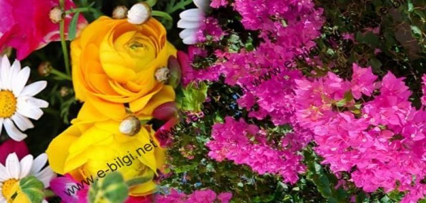 Düğün, Kutlama Ve Açılışlar İçin Çiçek Ve Çelenk Siparişi Verebilirsiniz