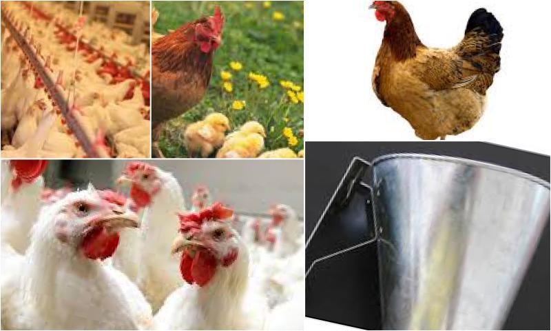 Kanatlı Eti Üretiminde Kullanılan Makineler